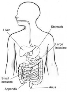 http://digestive.niddk.nih.gov/ddiseases/pubs/appendicitis/images/Appendicitis.jpg