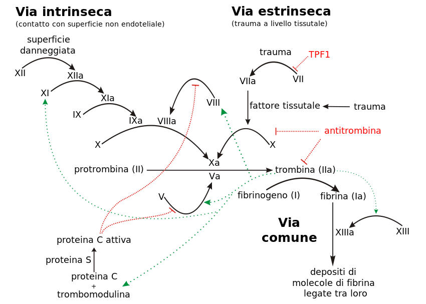 Di Italian translation by User:Gia.cossa of Image:Coagulation full.svg by Joe D - Italian translation of Image:Coagulation full.svg by Joe D, CC BY-SA 3.0, Collegamento